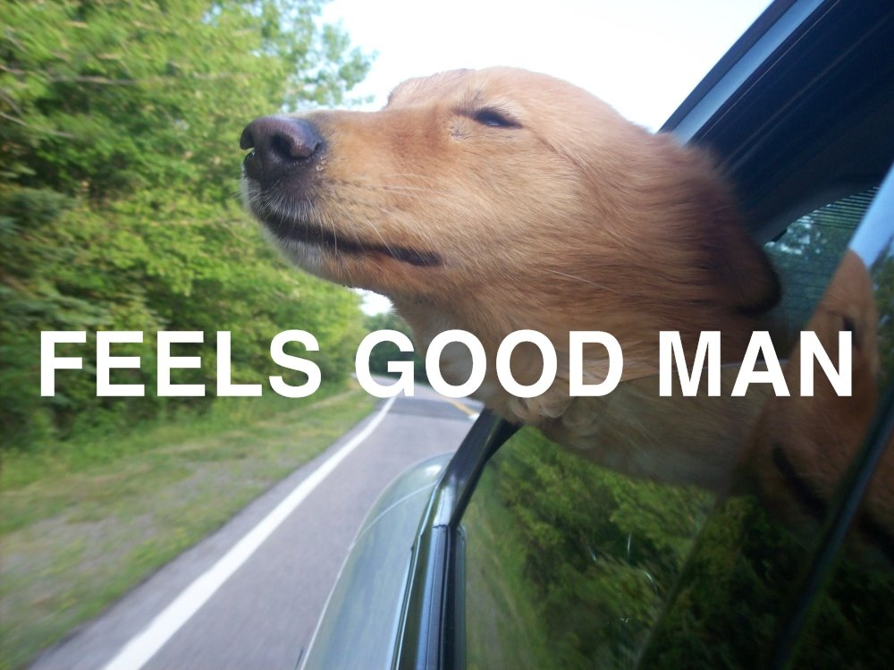 feel good dog